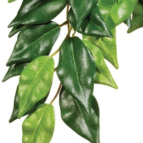 Hagen Exo terra Ficus silk medium rastlina do terária